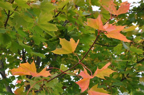 Autumn by Brenda Drumm